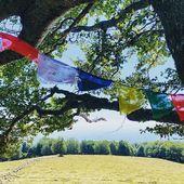 Belles ballades d'automne. Au fond la plaine d'Alsace. #specksports #drapeauxdeprieres #randonnée #vosges #alsace #thannerhubel #equipementderando